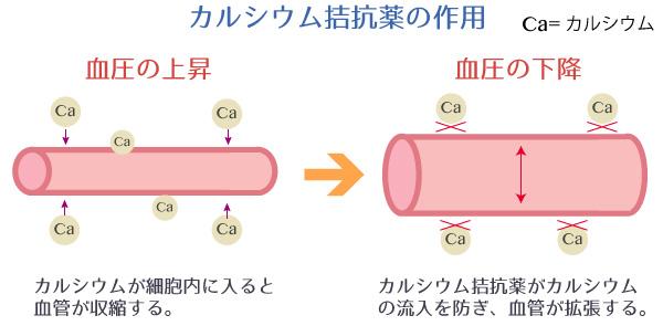 カルシウム拮抗薬の作用