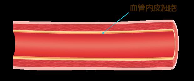 血管内皮細胞