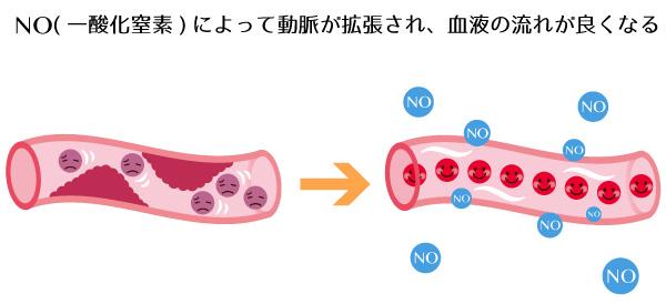 一酸化窒素が血管に与える影響