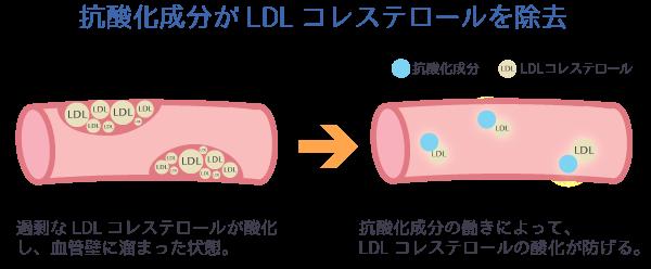 抗酸化成分がLDLコレステロールを除去。過剰なLDLコレステロールが酸化し、血管壁に溜まった状態。抗酸化成分の働きによって、LDLコレステロールの酸化が防げる。
