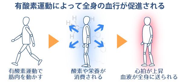 有酸素運動によって全身の血行が促進される。有酸素運動で筋肉を動かす→酸素や栄養が消費される→心拍が上昇。血液が全身に送られる