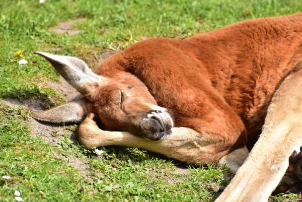 睡眠と血圧の関係