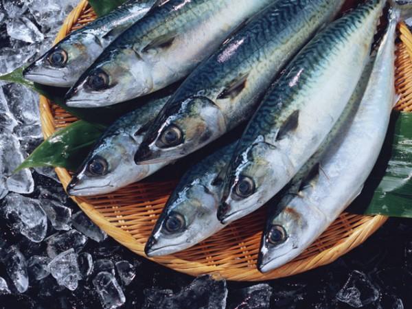青魚のEPA、DHA